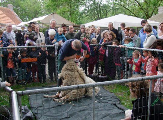 Schaapscheerfeest 18 mei